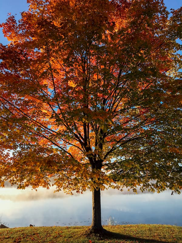 arbre par aaron burden