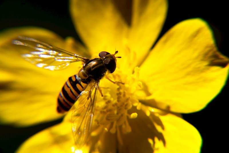 insecte polinisateur par Juanma Clemente-Alloza